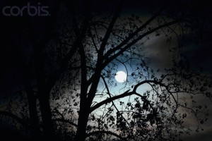 Moon Shining Through Tree Branches