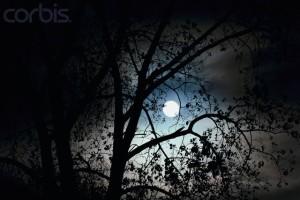 Moon Shining Through Tree Branches