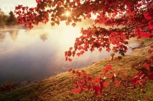 Sunrise Through Autumn Leaves