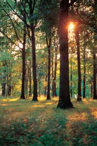 Sun shining through trees --- Image by © Scott Barrow/Corbis