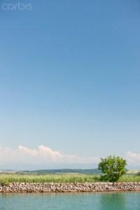 21 Jun 2008 --- Tall grass along lakeshore --- Image by © Milena Boniek/PhotoAlto/Corbis