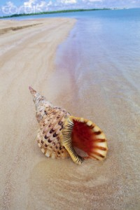 French Polynesia --- Shell Lying in Sand --- Image by © Douglas Peebles/Corbis
