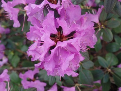 Adams Flower