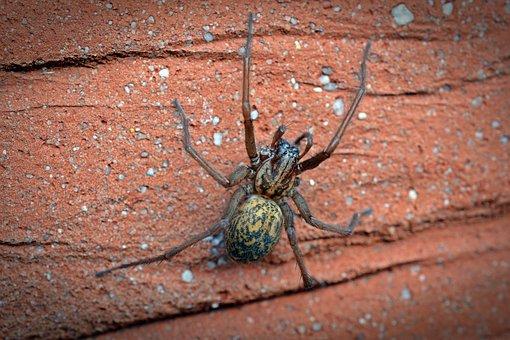 spider-1593590__340