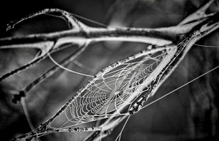 cobweb-166739_1920
