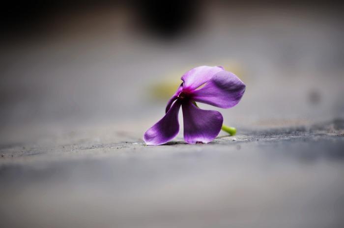 flower-288963_1920