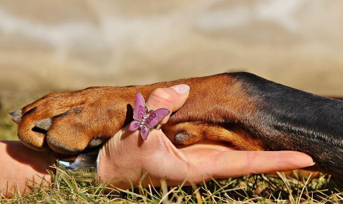 dog-paw-1102125_1920