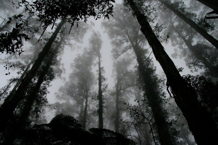 forest-1030832_1920