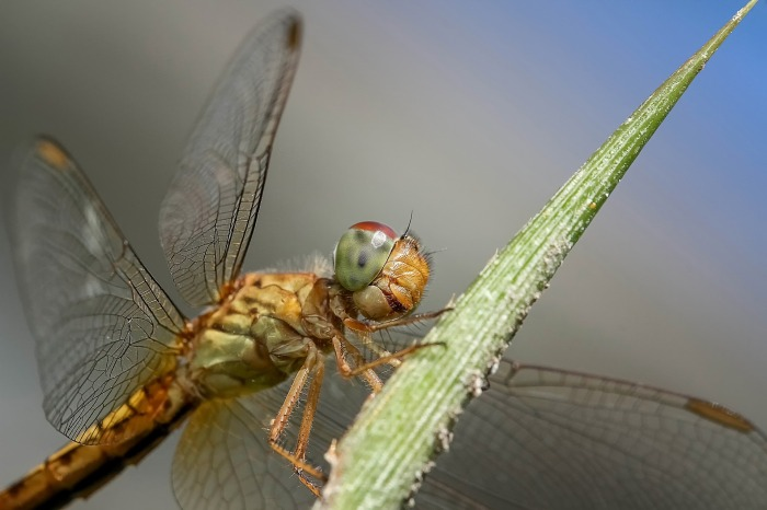 dragonfly-1122478_1920