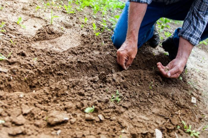 soil-2561136_1920