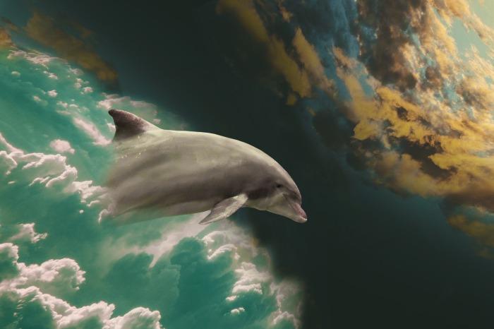 dolphin-2562115_1920