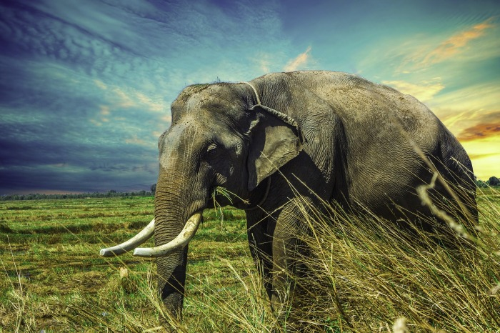 elephant-2729415_1920