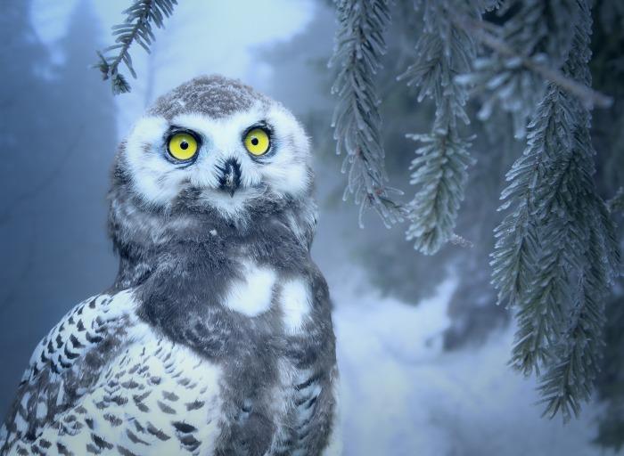 owl-3184032_1920