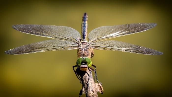 dragonfly-3456317_1920