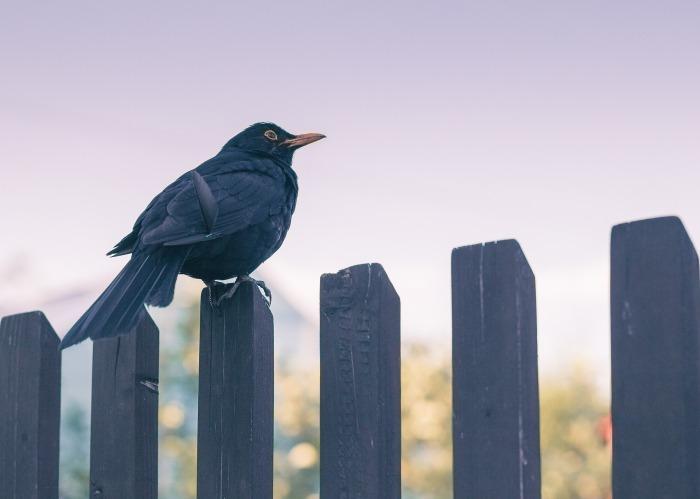 bird-3180681_1920